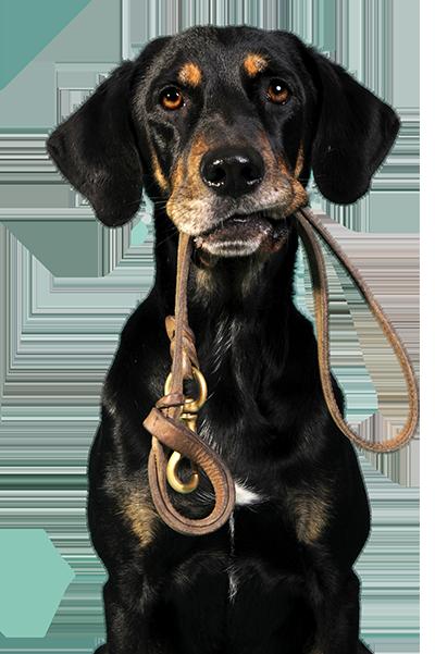 dogholdingleash1