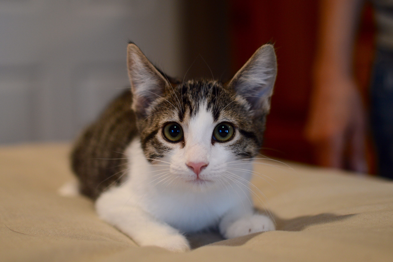 Available Pets - Denton Humane Society