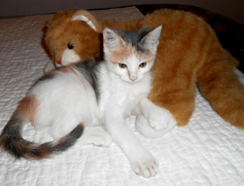 Kittens – Thelma and Louise